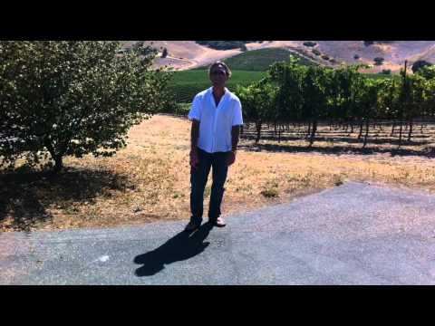 In the vineyard at Terry Hoage