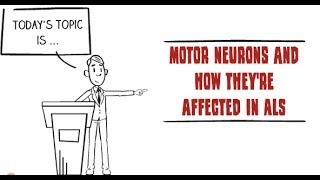 How motor neurons are affected by ALS