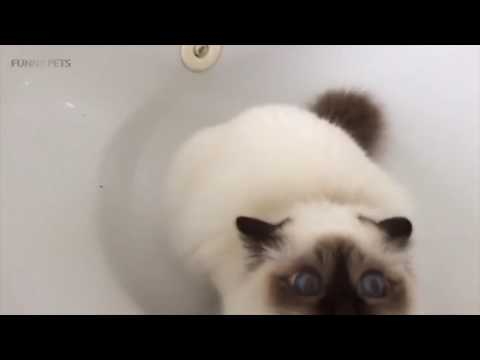 Funny Cats Getting Scared () [Funny Pets]
