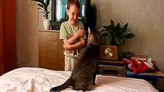 Кот напал на ребёнка
