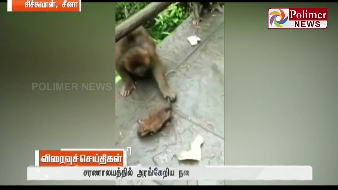 Viral video showing Monkeys playing with Mouse released | Polimer News