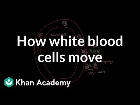 How white blood cells move around | Immune system physiology | NCLEX-RN | Khan Academy