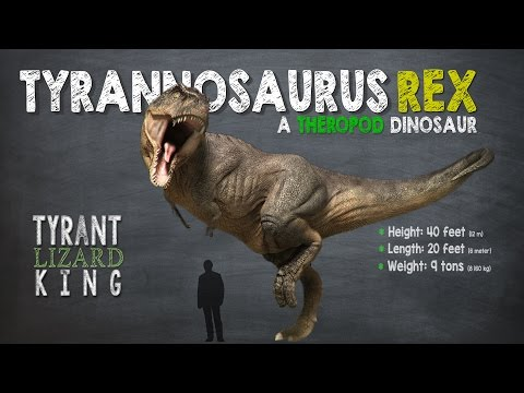 Tyrannosaurus Rex Facts! A Dinosaur Facts video about Tyrannosaurs Rex, also called T-Rex.