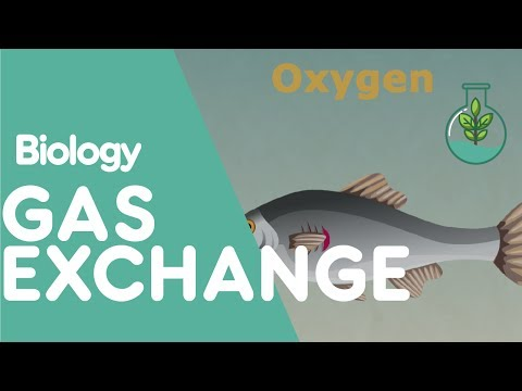 Gas exchange in different animals | Biology for All | FuseSchool