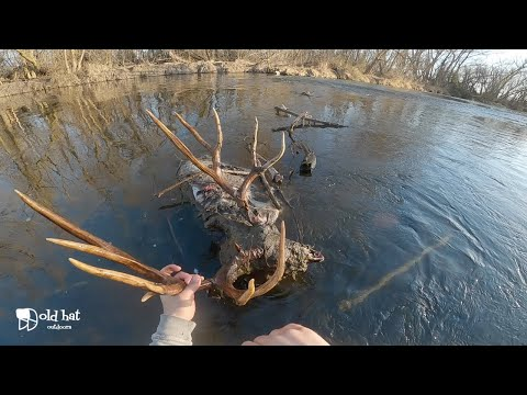 Idaho Fisherman Hauls In MASSIVE Mule Deer Carcass On The Boise River
