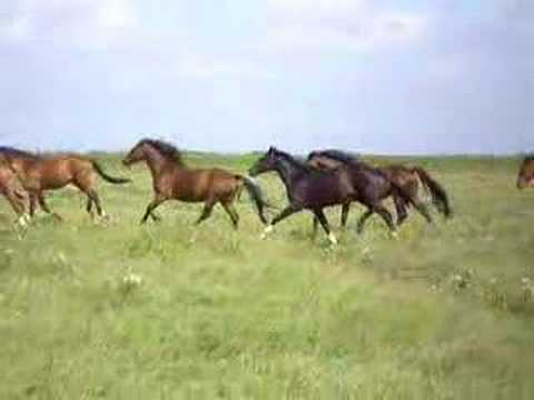 running horses - YouTube - photo#11