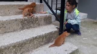 Рыжие, пушистые котята. Милый котята играют. Kittens play