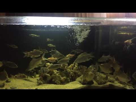 Amazon tank river