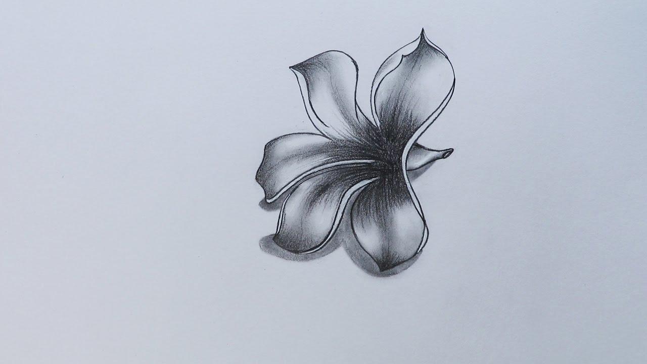d5ba1756c2ea3 How to Sketch Plumeria - YouTube