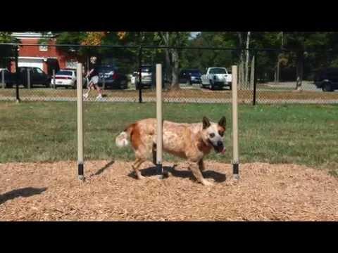 Dog Park Equipment - American Parks Company