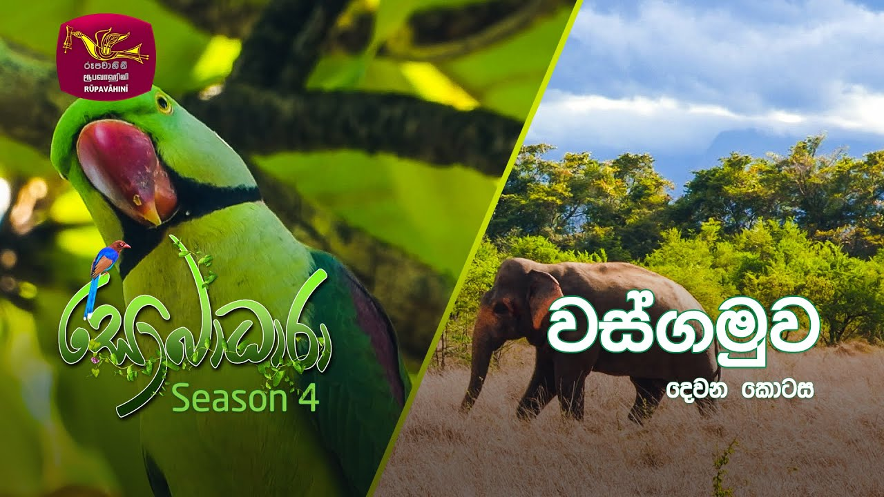 Sobadhara - Sri Lanka Wildlife Documentary | 2020-10-16 | Wasgamuwa National Park (වස්ගමුව)