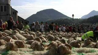 Tanshumance à Aramits (vallée de Barétous)
