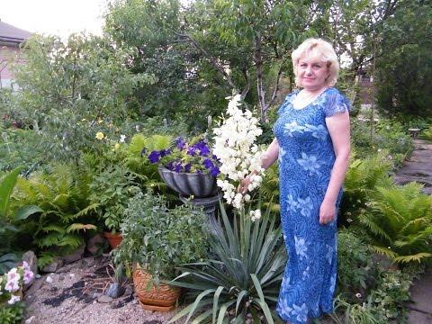 """Обрезка и подкормка ЮККИ весной. Помощник Барсик и """"сердце"""" моего сада. Юкка садовая нитчатая"""