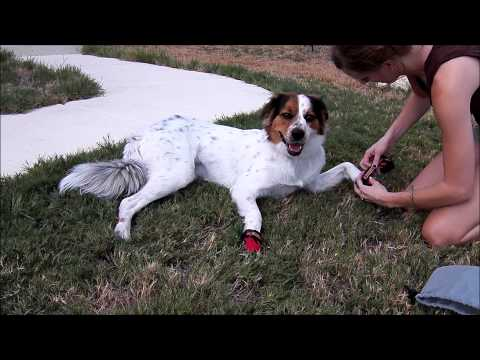 Ruff Wear Barkin Boots - Dog Hiking Shoes HD