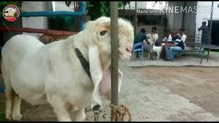 Kajla Chatra MP4 Video and Kajla Chatra Mp3 Download ✅