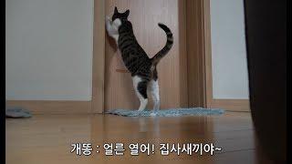 집사가 화장실 들어갈때마다 고양이는 꼭 이 행동을 합니다