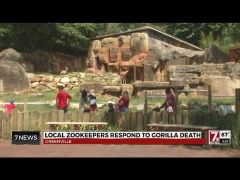 Greenville Zoo to review safety procedures after Cincinnati Zoo incident