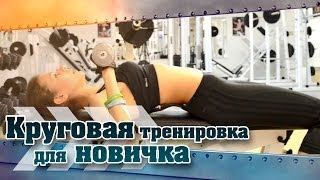 Круговая тренировка для НОВИЧКА. Укрепляем тело!