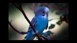 Признаки здоровой птицы