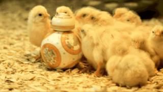 Dead Kennedys Chicken Farm by Czarny iTek