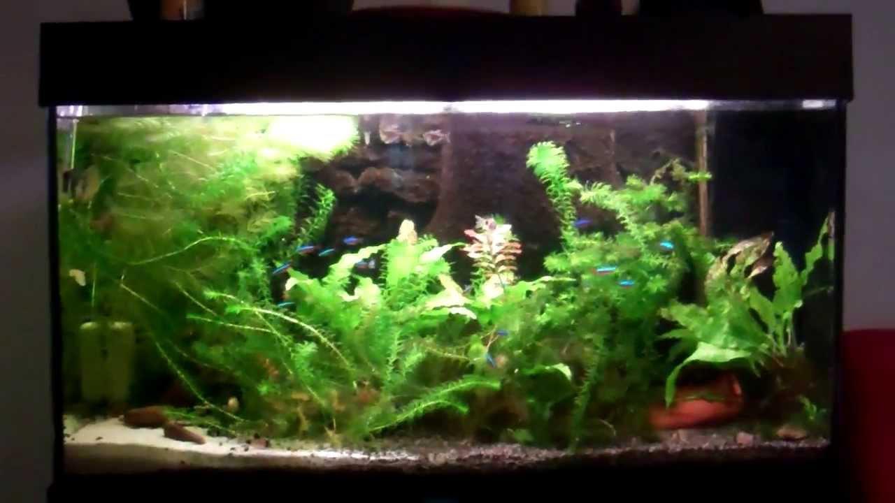 30 gallon community freshwater aquarium youtube for Community fish tank
