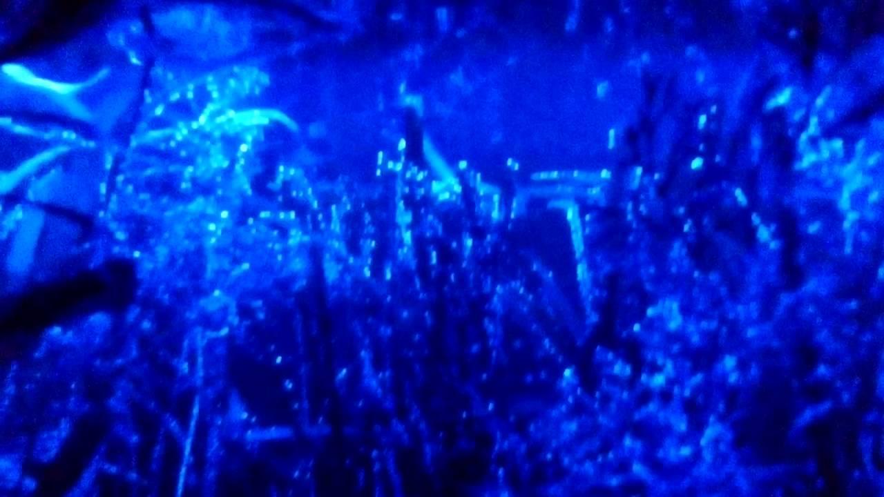 Nocne Oświetlenie Akwarium