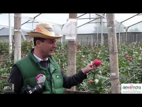 JFTV presents A Tour of Alexandra Farms