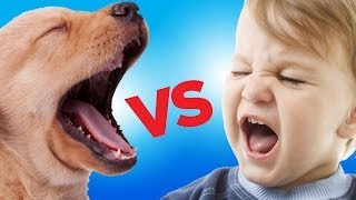Ultimate Puppy vs. Baby Showdown