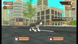 прохождение игры симулятор кошки онлайн кет сим