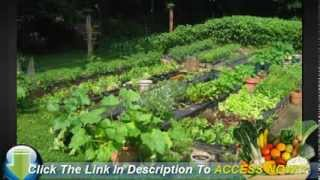 The Steps To Take When Growing Your Own Vegetable Garden