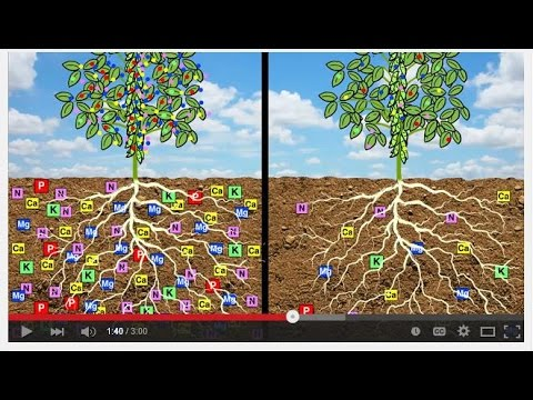 August soils support health youtube for Soil support