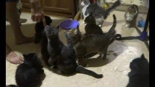 Смешные Имена для 15 КОШЕК девочек в доме ! коты и кошки видео 2018 про животных