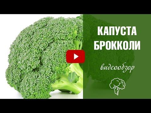 Сорта брокколи