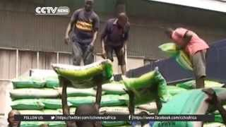 Nigeria targets self-sufficiency in rice and wheat sector