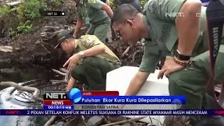 Gagal Diselundupkan Puluhan Ekor Kura Kura Dilepasliarkan - NET24