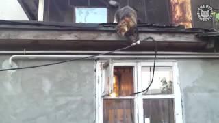 Смешной кошачий паркур