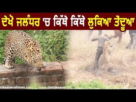 Exclusive: Ground Report: देखें Jalandhar में कहां-कहां छिपा Leopard