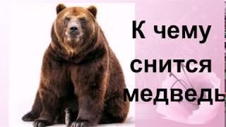 К чему снится медведь Сонник от Ирины