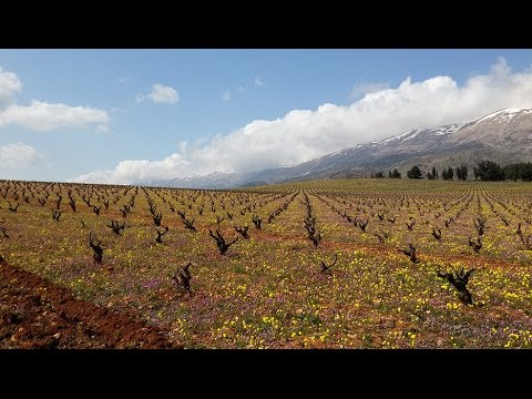 Lebanese Wine Industry in 2015-2016, Overview by Chateau Kefraya