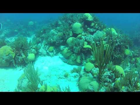 Bermuda Wreck Dive