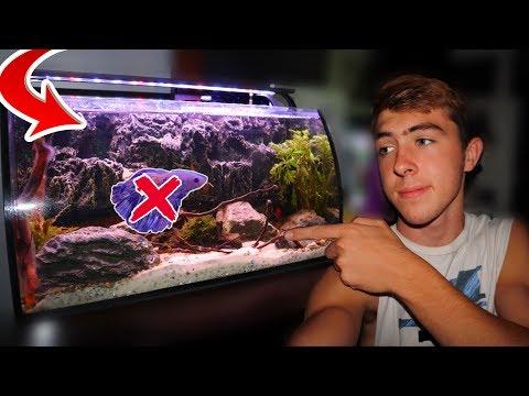 My RARE Betta Fish Has A Problem...
