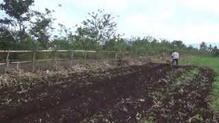 CY80 Tiller furrowing after tilling in corn field(已收割玉米田開溝)擎億變形小金鋼 中耕機