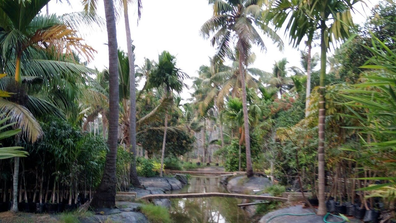 Seashore Farm Kakkathururthy Thrissur Best Places to Visit