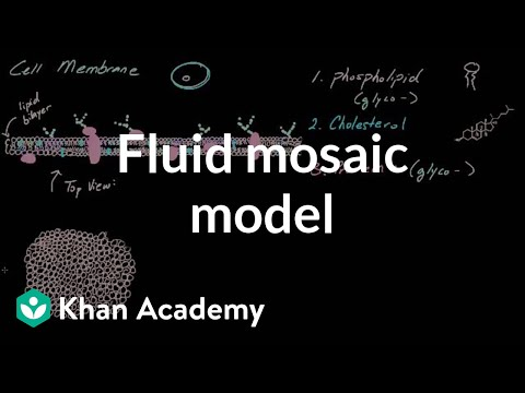 Cell membrane overview and fluid mosaic model | Cells | MCAT | Khan Academy