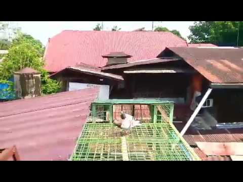 Homing Pigeon Coop Plans Awesome House Design In Philippines With Floor Plan New House Design Plans further SAt8YI9Tcd4 together with SAt8YI9Tcd4 additionally 110549365826446503 together with 568579521689793208. on racing pigeon trap door design