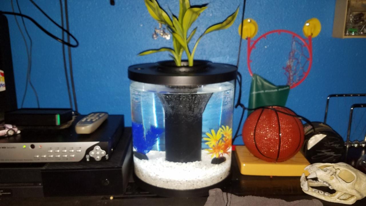 Review Of The Top Fin Aquaponics 3 5 Gallon Fish Tank