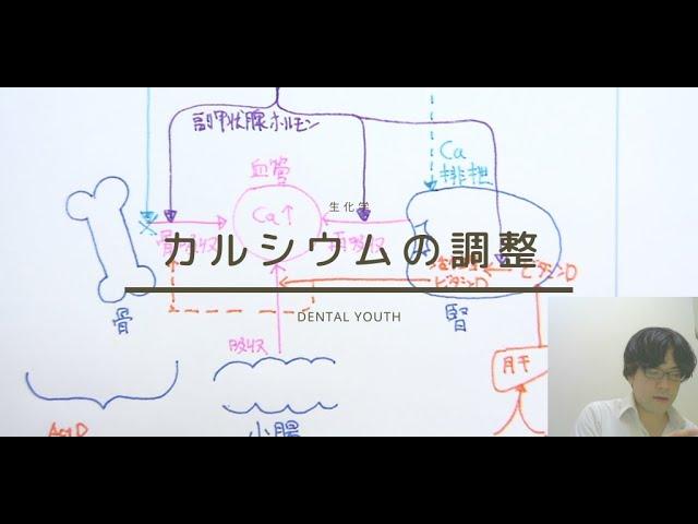 カルシウムの調整機構【歯科医師国家試験】
