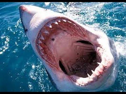 SEA WORLD Indonesia,Shark Feeding Jakarta Ancol - YouTube
