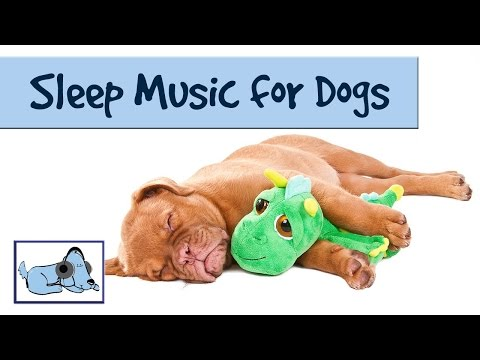 The Dog Song - Music to Help your Dog Sleep 🐶 RMD09