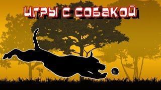 Игры с собакой | питбуль | амстафф | дрессировка собак(Игра для собак так же необходима, как и ежедневная кормежка и прогулки. Собаки до самой старости сохраняют..., 2015-08-08T15:18:12.000Z)